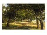 Wood Glade, 1889 Reproduction procédé giclée par Ivan Ivanovitch Shishkin