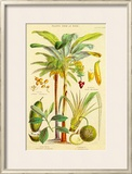 Plants Used As Food Poster by William Rhind