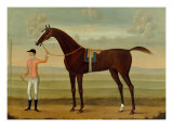 A Bay Racehorse with his Jockey on a Racecourse Print by Daniel Quigley