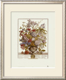 Twelve Months of Flowers, 1730, July Posters by Robert Furber