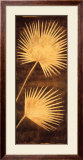 Fan Palm Triptych III Print by David Parks
