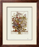 Twelve Months of Flowers, 1730, July Print by Robert Furber
