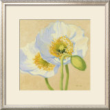 White Poppies III Prints by Shirley Novak