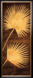 Fan Palm Triptych III Posters by David Parks