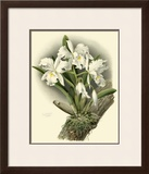 Dramatic Orchid I Prints by Chas Storer