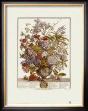 Twelve Months of Flowers, 1730, July Posters by Robert Furber