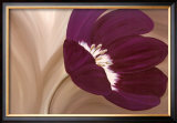 Velvet Poppy Art by Kaye Lake