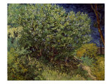 Lilac Bush, 1889 Posters by Vincent van Gogh