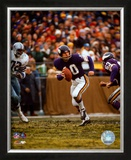Fran Tarkenton - &#169;Photofile Framed Photographic Print