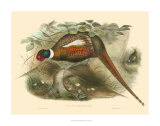 Pheasants II Reproduction procédé giclée par John Gould