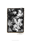 Springtime Garden VII Premium Giclee Print by Laura Denardo
