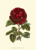 Magnificent Rose III Art by Ludwig Van Houtte