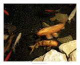 Goldfish Pond I Giclee Print by Alicia Ludwig