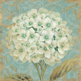 Hydrangea Square II Prints by Daphne Brissonnet