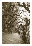 Boboli Arbor, Italy Giclee Print by Meg Mccomb