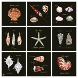 Striking Shells Nine Patch Prints by Ginny Joyner