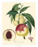 Peaches Giclee Print by  Bessa
