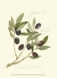Gaeta Olives Art by Elissa Della-piana