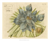 Blue Lotus Flower II Posters