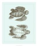 Loggerhead Turtles I Giclee Print