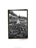Garden Elegance VIII Premium Giclee Print by Laura Denardo