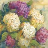 Hydrangea Delight II Poster by Carol Rowan