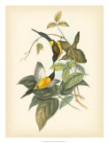 Birds of the Tropics IV Giclee Print by John Gould