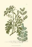 Leaves I Poster von Johann Wilhelm Weinmann