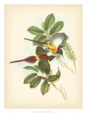 Birds of the Tropics III Giclee Print by John Gould