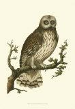 Owls II Posters by  Nozeman