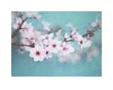 Plum Blossom Posters by Shana Rae