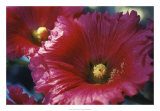 Red Hollyhock Giclee Print by Meg Mccomb