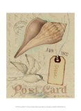 Postcard Shells IV Posters by Nancy Shumaker Pallan