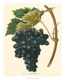 Grapes II Prints by Bessa 
