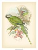 Birds of the Tropics II Stampa giclée di John Gould