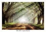 Evergreen Plantation Affiches par Mike Jones