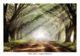 Evergreen Plantation Print by Mike Jones