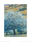 Olive Tree and Fields, Rhodes Prints by Robert Jones
