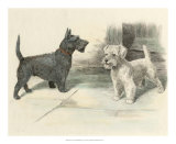 Two Scotties Giclee Print by H. Dixon