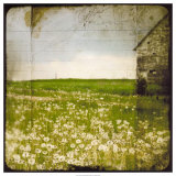 Field II Giclée-tryk af Ingrid Blixt
