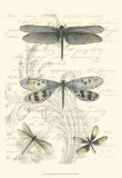 Dragonfly Delight II Print