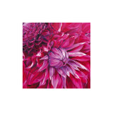 Fabulous Pink Dahlias Prints by Sarah Caswell