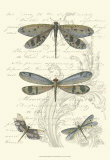 Dragonfly Delight I Prints