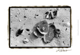 Sand Treasures III Print by Laura Denardo