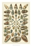 Seba Shell Collection V Giclee Print by Albertus Seba