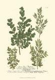 Leaves II Kunstdrucke von Johann Wilhelm Weinmann