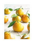Golden Satsumas Posters by Howard Shooter