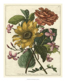 Floral Posy I Giclee Print by Giovanni Ferrari