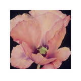 Delicate Pink Poppy Prints by Maggie Thompson