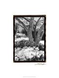 Springtime Garden VI Giclee Print by Laura Denardo